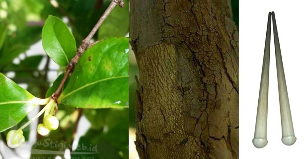 Pohon kayu dewandaru